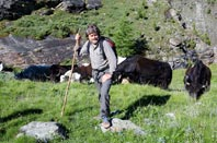 Drive yak up to the alpine pastures with Reinhold Messner